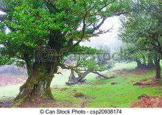 Stock Photo - Fairy Tree - stock image, images, royalty free photo, stock photos, stock photograph, stock photographs, picture, pictures, graphic, graphics
