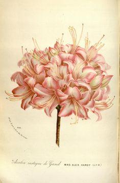 Pinterest le catalogue d 39 id es - Tableau vegetal jardiland ...