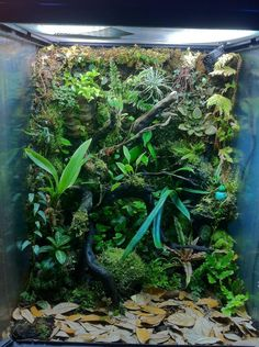 vertical wall!... dart frog home