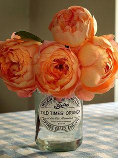 orange ranunculus :: welcome, spring