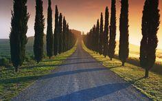 I cipressi della val d'Orcia | Il giardino segreto d'Italia