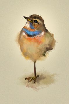 Could anybody tell me what the name of this beautiful bird is?~ :) thanks.