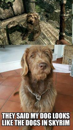 Dogs in Skyrim are based of Irish wolf hounds Skyrim Gif, Tes Skyrim, Skyrim Cosplay, Skyrim Funny, Anime Cosplay, Elder Scrolls Memes, Elder Scrolls Skyrim, Video Game Memes, Video Games