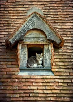 The cottage cat's window! ♡... Re-pin by StoneArtUSA.com ~ affordable custom pet memorials for everyone.
