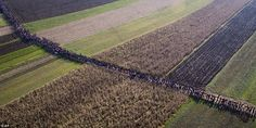 The huge column of migrants passes through fields in Rigonce, Slovenia, after having been ...
