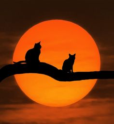 Two Cats on a First Date and Sitting on a Tree Branch in Front of a Almost Blood Moon?