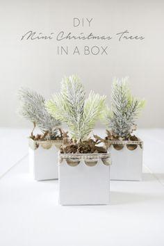 DIY Mini Christmas Trees in a Box - brepurposed