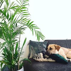 15 Houseplants That Are Beautiful AND Safe For Cats And Dogs A bamboo palm will add those ~tropical vibes~ you love to your home — and without much effort on