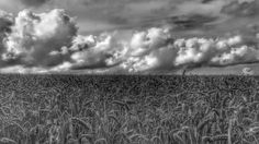 Clouds and fields