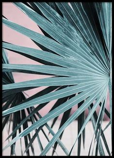 Pastel Palm No2 Poster in the group Prints / Sizes / 50x70cm | 20x28 at Desenio AB (10389)