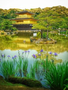 Gold and violet, Kinkakuji, Kyoto, Japan... I have been in this exact spot three times in 1984, 1988 and 2012
