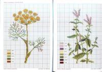 Gallery.ru / Фото #19 - Herbarium — Льняные травки - Mosca