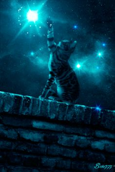 paintings of cats with stars I Love Cats, Cool Cats, Good Night Gif, Warrior Cats Art, Kitten Care, Cute Animal Drawings, Cat Wallpaper, Cool Animations, Halloween Cat