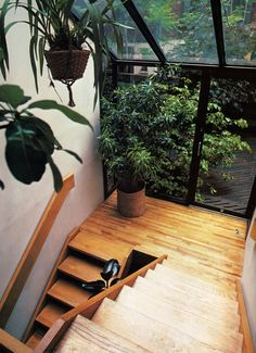 Love the natural  environment created around these stairs.  Great way to bring the outside in.
