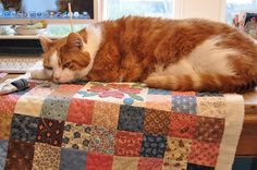 Yet another cat on a quilt.