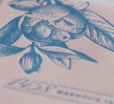 Southern Belle #blush #denim #letterpress #weddinginvitations #floral #abbeymalcolmpress #abbeymalcolmletterpressanddesign www.abbeymalcolmpress.com