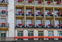 Zürich, geranium windows | Flickr: Intercambio de fotos