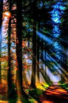 Take a look at these amazing Nature photos and videos 💕 💋 Beautiful World, Beautiful Places, Beautiful Forest, Magical Forest, Beautiful Beautiful, Beautiful Sunset, Beautiful Moments, Beautiful Paintings, Science And Nature