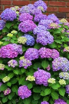 101 Gardening: How To Grow Hydrangeas From Cuttings #Flowers