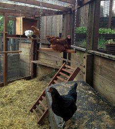 The Ritz Carton of Portola Valley – Silicon Valley – Tour De Coop Chicken Roost, Chicken Coop Run, Diy Chicken Coop Plans, Chicken Coup, Chicken Garden, Chicken Life, Backyard Chicken Coops, Building A Chicken Coop, Chickens Backyard