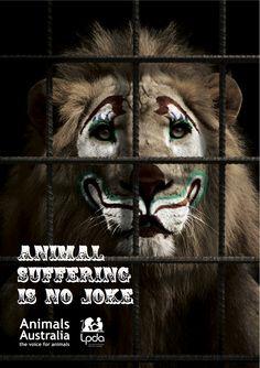 Het lijden van dieren in circussen. Dierenleed is geen vermaak!  Niet wat we willen, toch?