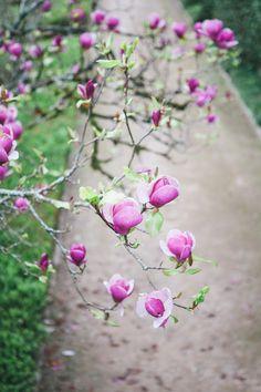 Botanical Garden - Coimbra | Portugal