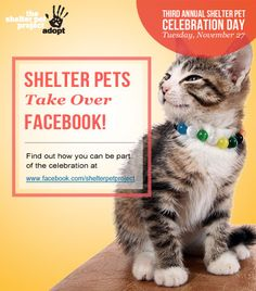 Don't forget to circle Tuesday, Nov. 27! That's the day that shelter pets take over Facebook for the third year in a row!    Starting that morning, just head over to the Shelter Pet Project Facebook page, and find out how you can tell the world just how GREAT your adopted pets are. And please… share! Share everywhere!