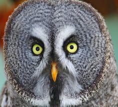 Owl Fun Facts