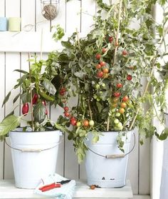 Grow your own balcony vegetables – for snacking and with a high ornamental value – Growing Vegetables - Growing Plants at Home Garden Types, Balcony Plants, Indoor Plants, Balcony Gardening, Indoor Herbs, Landscaping Tips, Garden Landscaping, Organic Gardening, Gardening Tips