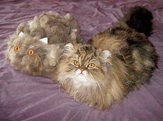 Mejores amigos peludos para siempre.  Un gato llamado Jeff, propiedad de Ron Eames, posa junto a su doble inanimado, fabricado con su propio pelo, mientras participan en la competencia 'Super Mega Cat', un concurso de fotografía felina realizado por la cadena británica de sushi Yo! Sushi. REX Features;
