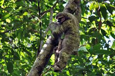 Costa Rica - Not having a true cultural experience but in Monteverde