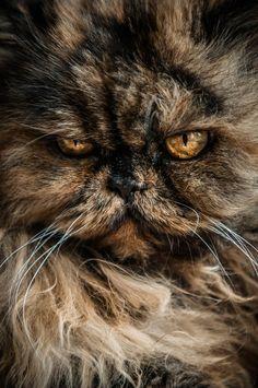 Best. Face. Ever. - Socialteesnyc.org