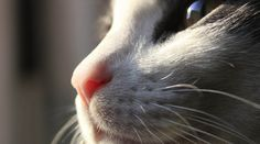 #Whiskers are more than meets the eye!  9 Surprising Facts About Cat Whiskers |