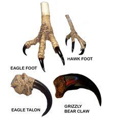 eagle claws - Google Search Wedding Logos, Wedding Humor, Wedding Quotes, Native American Regalia, Native American Crafts, Wedding Wishes For Friend, The Scottish Play, Eagle Claw, Bear Claws