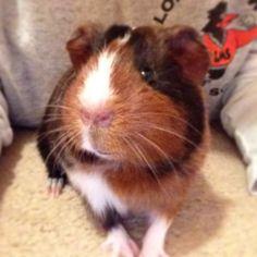 Winnie Pig