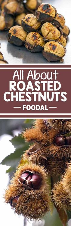 We sing its praises all the time during the holidays (literally), but do you know why we roast chestnuts on an open fire? Roasted chestnuts are popular winter fare around the world. From China to America, from ancient history to the modern day, from cooking indoors at home grabbing a snack from an outdoor street vendor, these toasty nuts are definitely essential during the cold months!