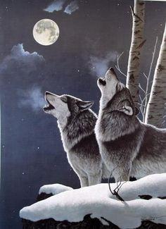 ♂ Wolf couple moon night animal wild life photography
