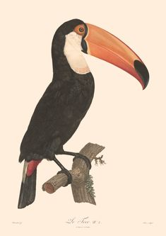 Biodiversity Birds Culmenated Toucans Canvas Wall Art Print Poster with Hanger