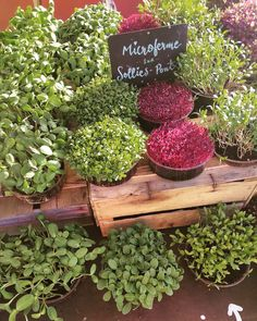 The incredible microgreens made in France Market Stalls, Plum, The Incredibles, France, Fruit, How To Make, Dutch Oven, Market Stands, Market Displays