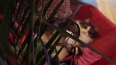 Tom in the jungle
