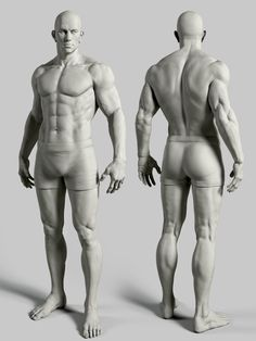 form of the male figure arm arms leg legs torso pelvis anterior posterior dorsal front back rear