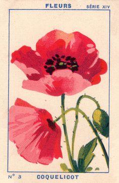 milliat fleurs001 | patricia m | Flickr