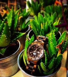 The greener The better! wooden watches #whoodbrooklyn #whb