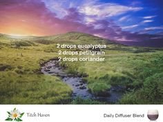 #essentialoils #diffuserblend #aromatherapy #eucalyptus #petitgrain #coriander