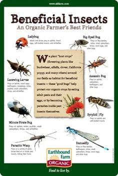 Beneficial Insects - an organic farmer's best friends!