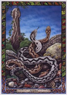 Adder  - Druid Animal Oracle Deck - 33 Cards by Stephanie Carr-Gomm, Philip Carr-Gomm, Will Worthington