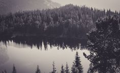 Forest Black And White HD Wallpaper