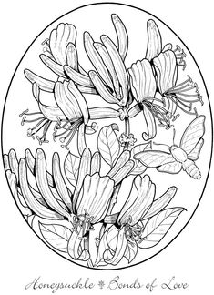 Welcome To Dover Publications From Creative Haven The Beautiful Language Of Flowers Coloring Book