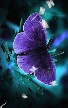 Butterfly Video, Butterfly Clip Art, Butterfly Flowers, Flower Art, Butterfly Photos, Purple Butterfly Wallpaper, Flower Phone Wallpaper, Fall Wallpaper, Motion Wallpapers