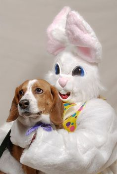 Dog poses with the Easter Bunny #dogwitheasterbunny
